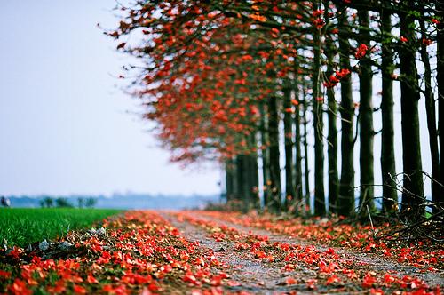 Beautiful Nature Photography Tumblr 1