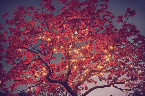 Beautiful Nature Photography Tumblr 3