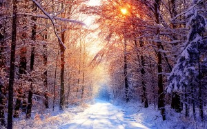 winter-nature-backgrounds
