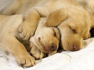 6784225-cute-dogs