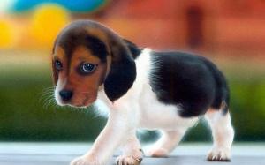 cute-dog-hd