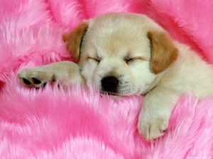 Cute-dogs-hd-download-3