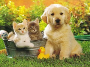 dogs-and-cats-pictures