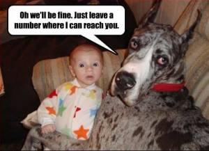 Great-Dane-quiet-dogs