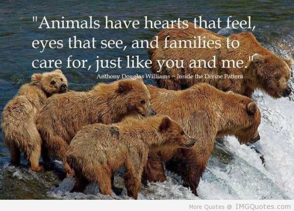 animals-have-hearts-that-feel-eyes-that-see-and-families-to-care-for-just-like-you-and-me