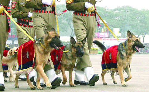 itbp-canines